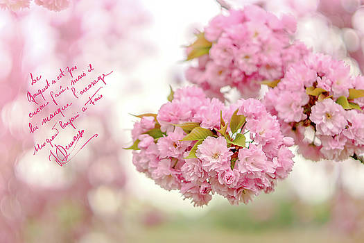 Pink Cherry Blossom by June Marie Sobrito