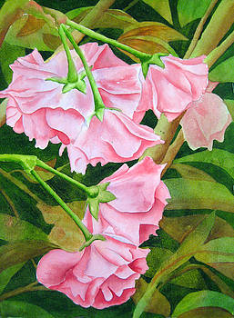 Pink Cherry Blossoms by Darla Brock