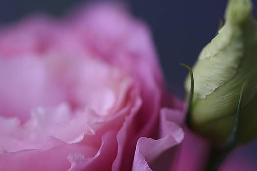 Pink Closeness by Rochelle Kassens