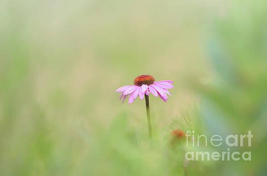 Pink Coneflower - Flowers of Summer by Kerri Farley