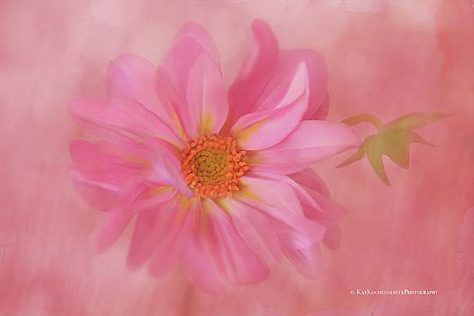Pink Dahlia by Kay Kochenderfer