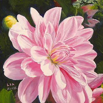 Lea Novak - Pink Dahlia