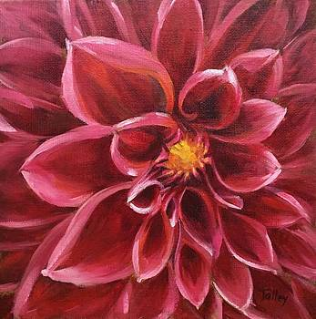 Pink Dahlia by Pam Talley