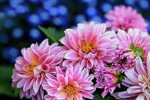 Pink Dahlias on Lobelia by Vanessa Thomas