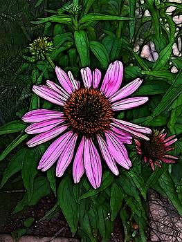 Pink Daisey by Nick Heap