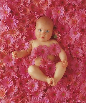 Anne Geddes - Pink Daisies