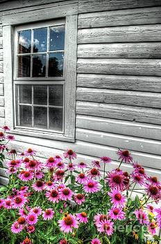 Pink Daisies by Randy Pollard