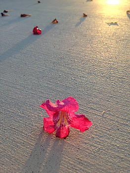 Stan  Magnan - Pink Dawn