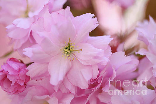 Pink Delight by LHJB Photography