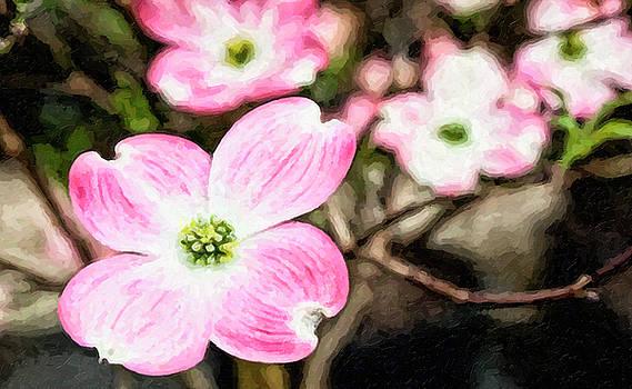 Jill Lang - Pink Dogwood Painting