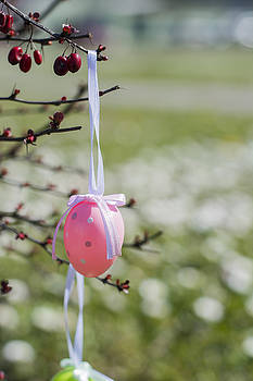 Newnow Photography By Vera Cepic - Pink Easter egg hanging on branches outdoors with white flowers