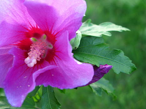 Pink Flower by Candice Wright