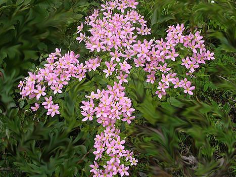 Anne Cameron Cutri - Pink Flower Cross