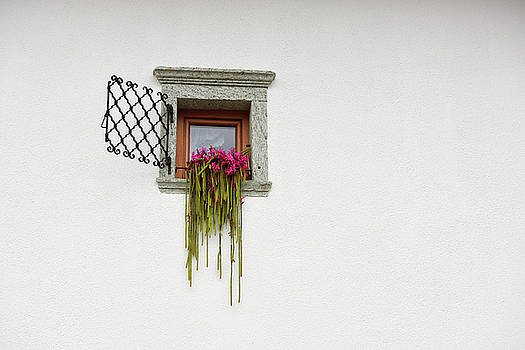 Pink flowering Rattail cactus in window on white stucco wall at rooms Jerman Mlino village Bled Slov by Reimar Gaertner