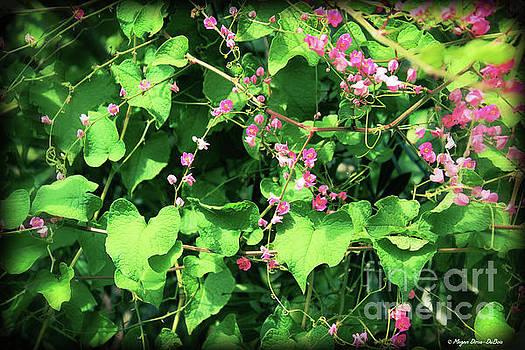 Pink Flowering Vine2 by Megan Dirsa-DuBois