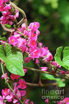 Pink Flowering Vine3 by Megan Dirsa-DuBois