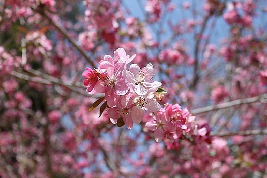 Pink Flowers by Alexa Gurney
