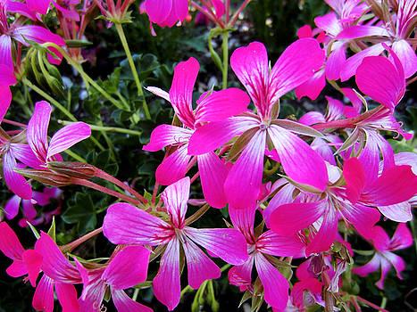 Pink Flowers by Diamond Jade