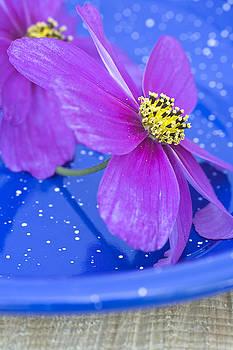 Frank Tschakert - Pink flowers