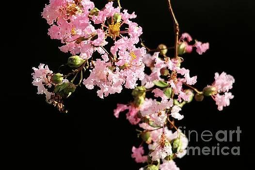 Paulette Thomas - Pink Flowers II