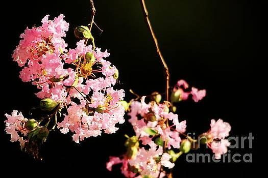 Paulette Thomas - Pink Flowers