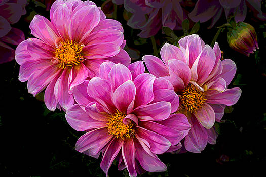 Rick Strobaugh - Pink Flowers