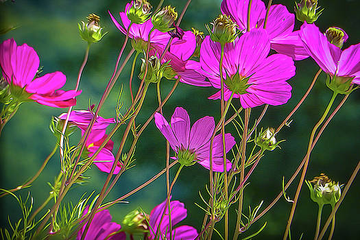 Pink Flowers by Robert Meyerson