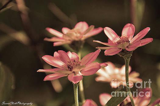 Pink Flowers by Susan Cliett