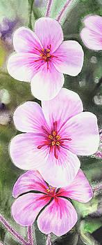 Pink Flowers Watercolors Elongated Format by Irina Sztukowski