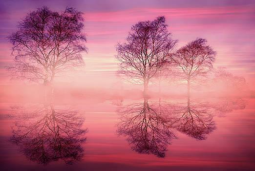 Svetlana Sewell - Pink Fog