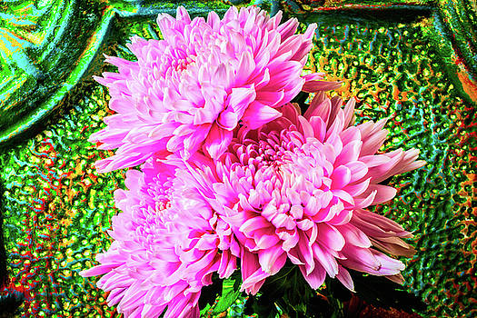 Pink Football Mums by Garry Gay