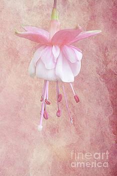 Pink Fuschia by Lynn Bolt