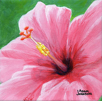 Adam Johnson - Pink Hibiscus