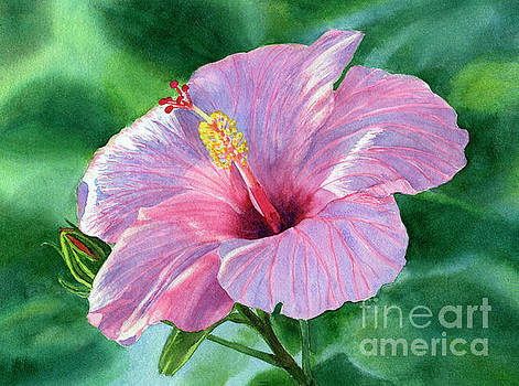 Pink Hibiscus Flower with Leafy Background by Sharon Freeman