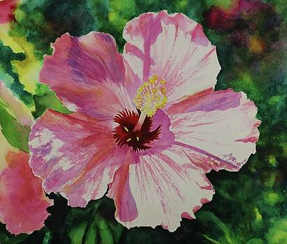 Pink Hibiscus in the Summer Sunshine.  by Pat Gerace