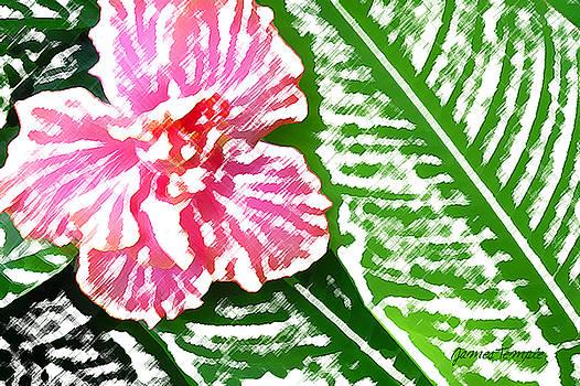 James Temple - Pink Hibiscus