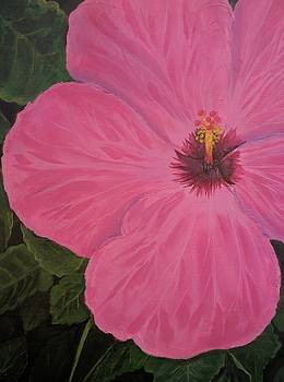 Pink Hibiscus by Maria Stanley