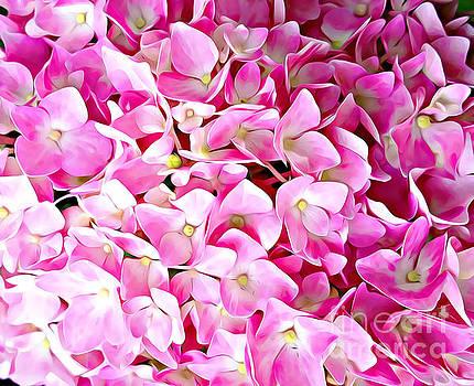 Pink Hydrangea by Judy Palkimas