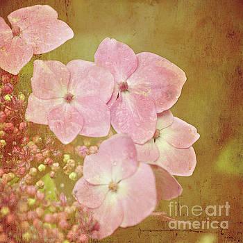 Pink Hydrangeas by Lyn Randle