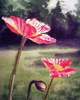 Pink Iceland Poppies Watercolor  by Irina Sztukowski