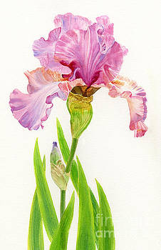 Sharon Freeman - Pink Iris with Leaves on White