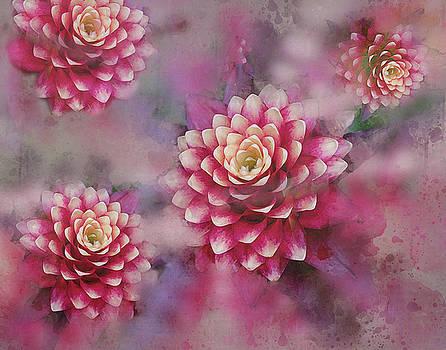 Pink by Judi Saunders
