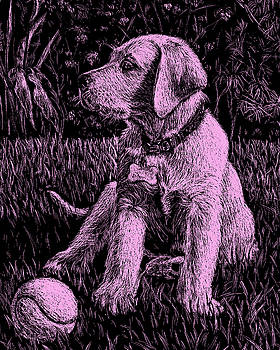 Pink Labrador Puppy Dog by Irina Sztukowski