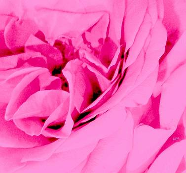 Pink Lady - The Last Rose-Dedicated  by VIVA Anderson