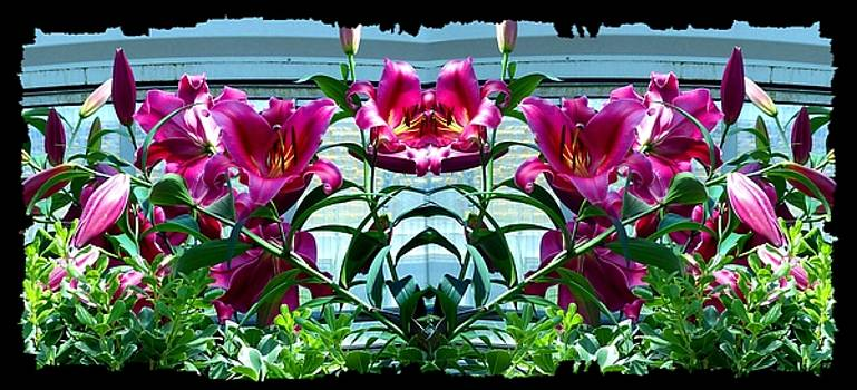 Pink Lilies Fusion by Will Borden