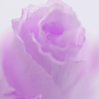 Sandra Foster - Pink Lisianthus Macro