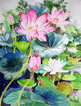 Pink Lotus and White Water Lilies by Vishwajyoti Mohrhoff