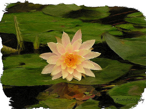 Pink Lotus In Pond by Ricardo Szekely