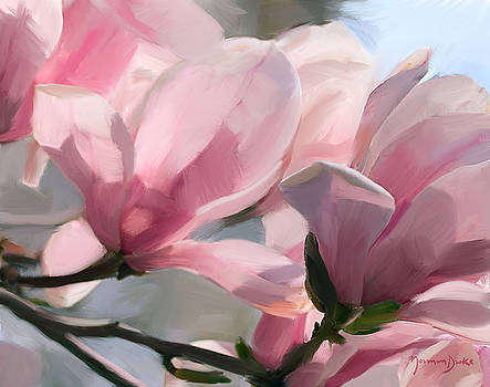 Pink Magnolia Blossoms by Norman Drake