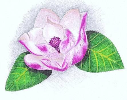 Scarlett Royal - Pink Magnolia